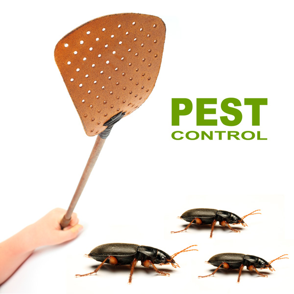 A bug free world - Pest Control Dubai, U. A.E
